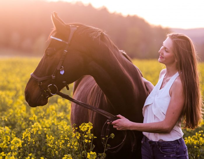 Pferdeshooting im Rapsfeld